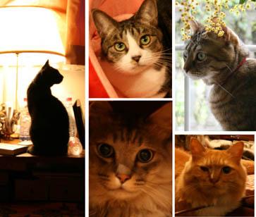 52 ネコ全員.jpg