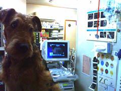 nestly in hospital.blog.jpg